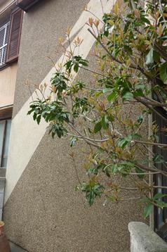 ビフォー 外壁